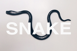 SNAKE by Linda Fahey: Galle...