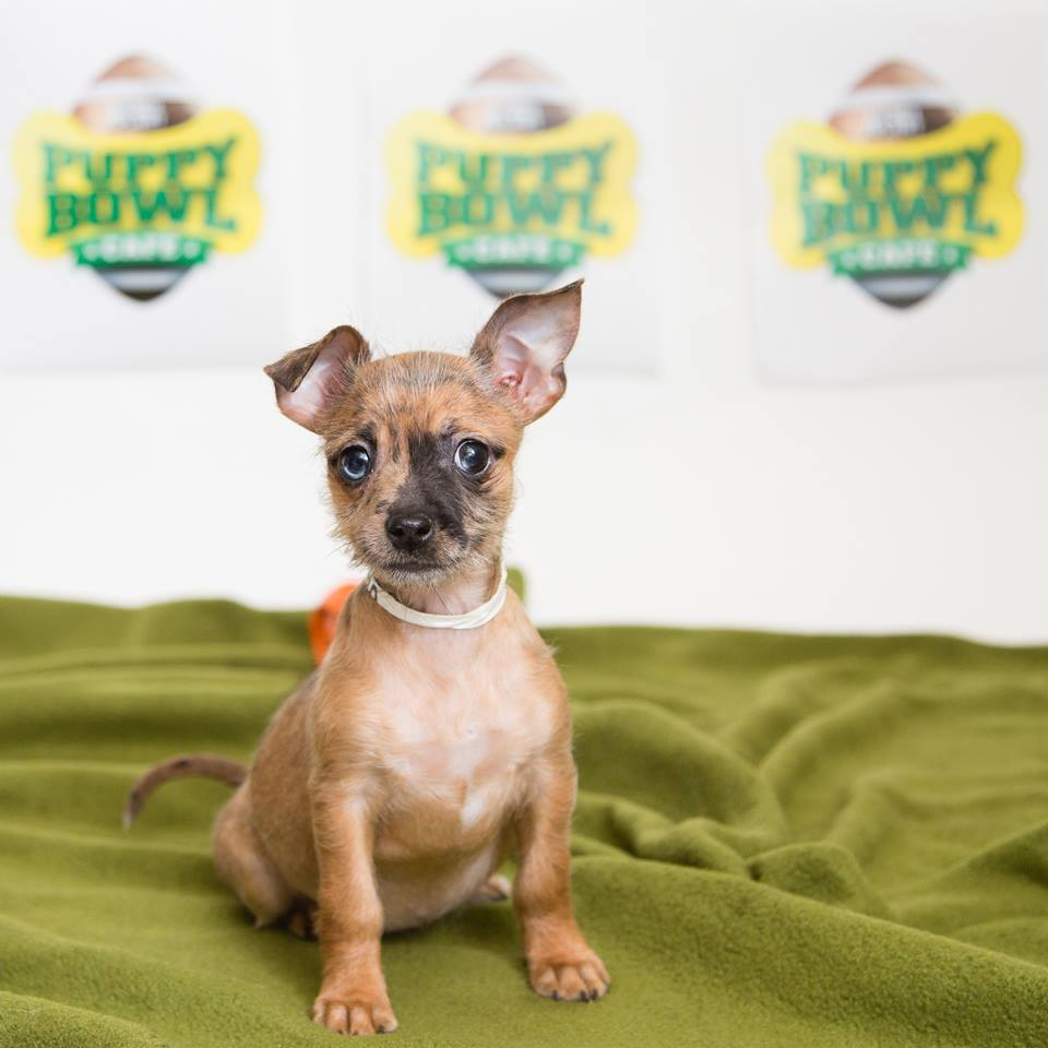 Animal Planet's Puppy Bowl ...