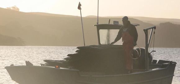 Q&A with Hog Island Oyster Co.