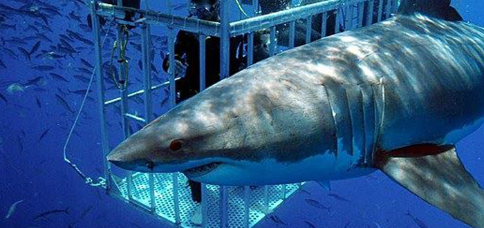 'Sharktoberfest' Celebrates Sharks in San Francisco