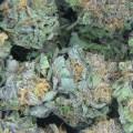san-jose-medical-marijuana-vote