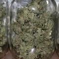 emerald cup jars of weed