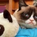 grumpy-cat-san-francisco