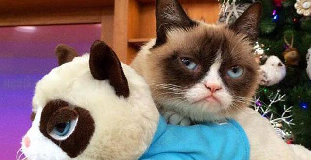 Grumpy Cat is in San Francisco Tonight