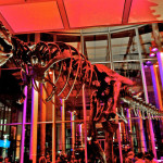 Tim-Williamson_dino-e1450144363191_mainimg