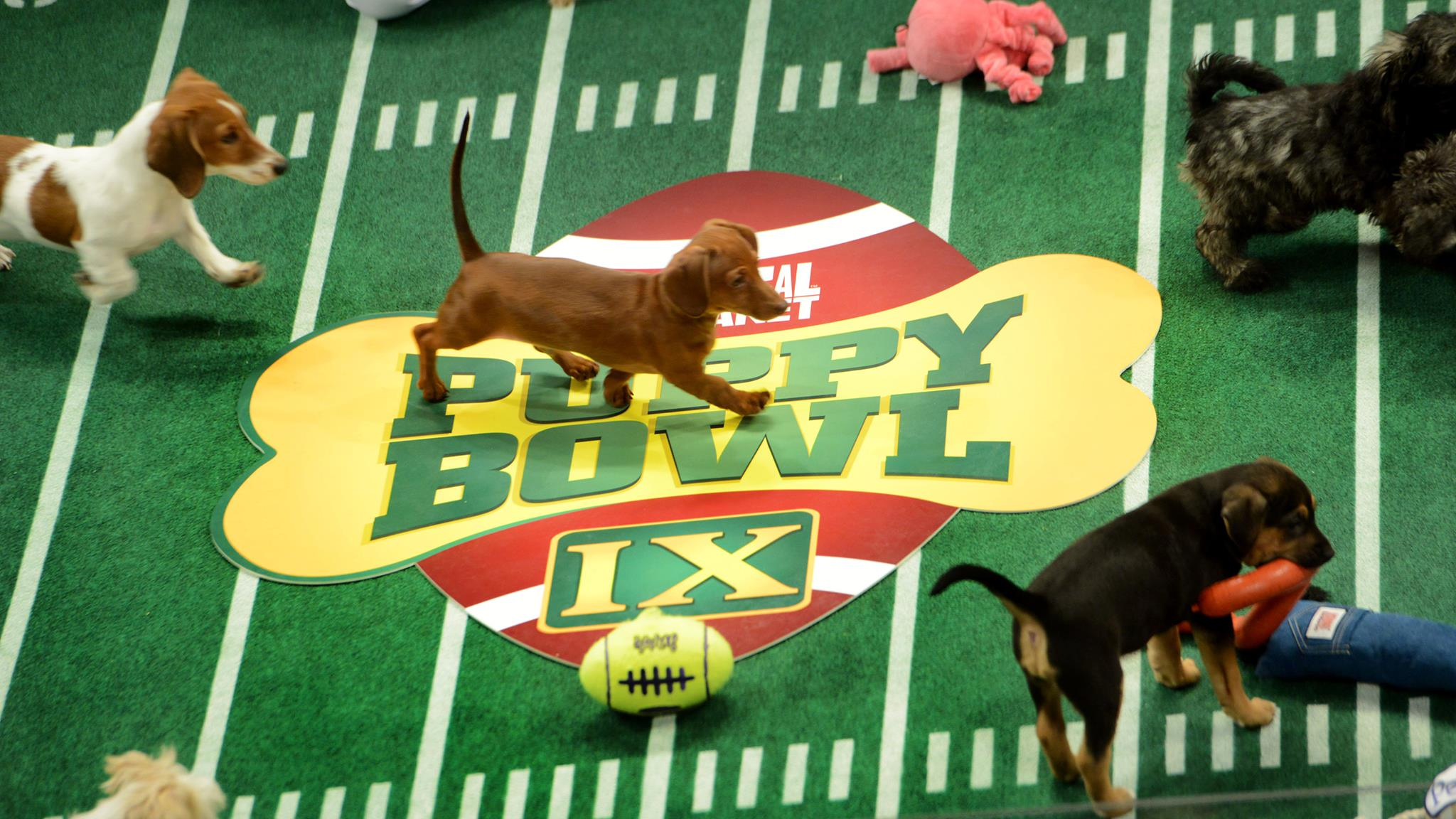 Puppy Bowl Cafe Wins Major Cute Points & Supports Local Shelters: Double Win!