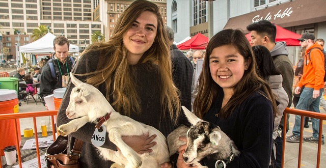 Goat Festival Returns to San Francisco's Ferry Plaza
