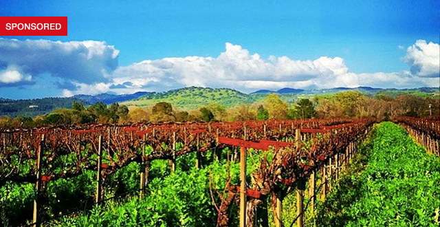 5 Luxurious Events from Yountville Live's Multi-Day Music, Food & Wine Festival