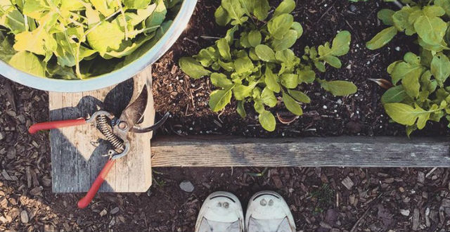 Get Your Hands Dirty: A Guide to Accessible Community Gardening in San Francisco