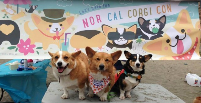 10 Adorable Photos to Get You Ready for Cuteness Overload at the NorCal Corgi Con