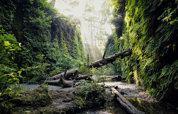 Hiking Fern Canyon (Photo by Alex Green)