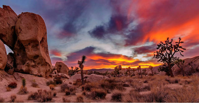 Sunset over Joshua Tree (Photo: National Parks Conservation Association)