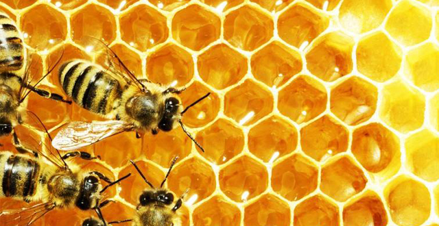 September is National Honey Month! 5 Sweet Local Companies in the Bee Biz