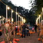 pumpkinpatch2