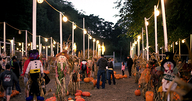 pumpkin patches corn mazes and haunted houses in the bay area