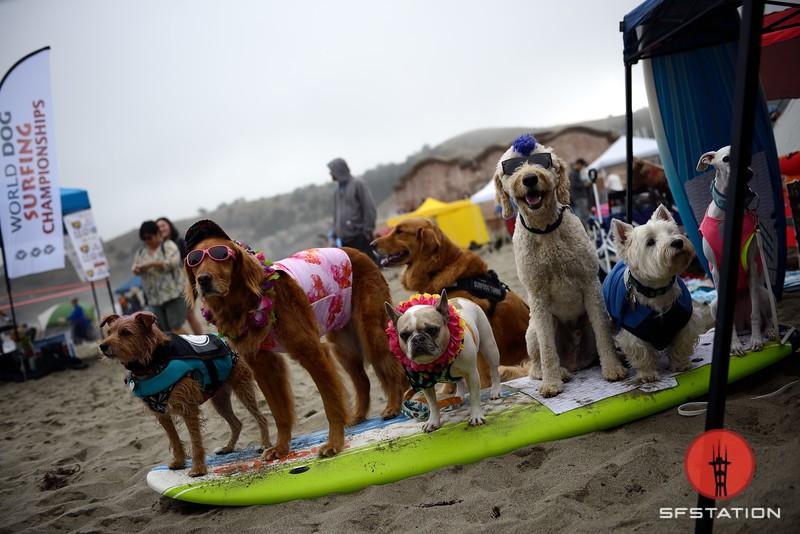 jonbauer_worlddogsurfingchampionships